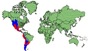 North/South America