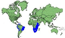 South America/Africa