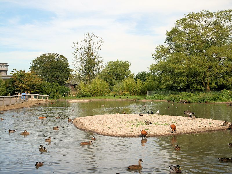 Asia Zone - Slimbridge