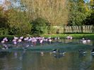 Slimbridge - Lesser Flamingo Zone (September 2012)