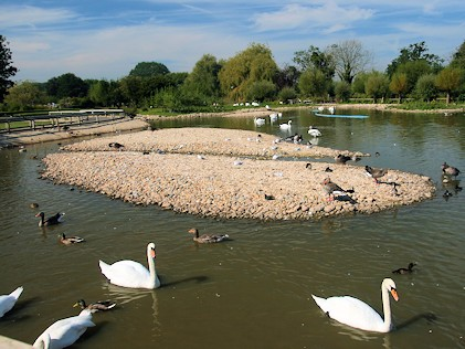 Swan Lake Zone - Slimbridge